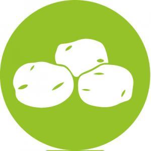 Culture des légumes tubéreuses